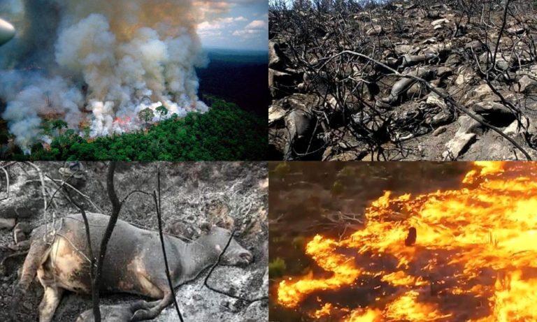 Αμαζόνιος: Παγκόσμια κραυγή αγωνίας για την ανυπολόγιστη καταστροφή