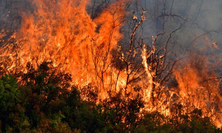 Φωτιά: Μέτωπα μαίνονται σε Θήβα και Θάσο (pics)
