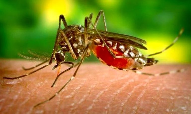 20 Αυγούστου: Παγκόσμια ημέρα κατά των κουνουπιών!