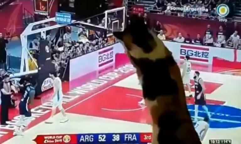 Αργεντινή: Το γούρι της είναι μια… γάτα! (vid)