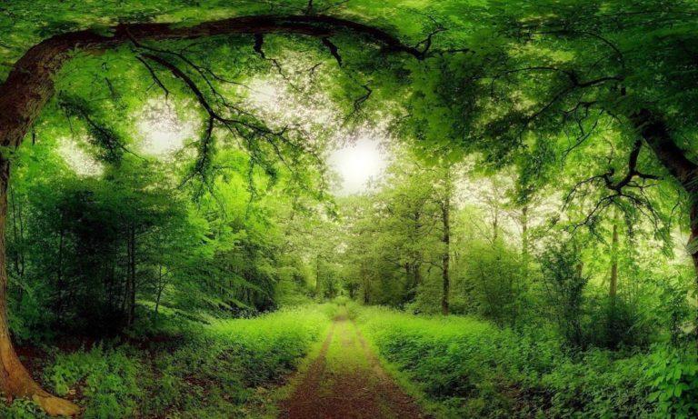 Παγκόσμια Ημέρα Δασοπονίας: Φέρνει τον άνθρωπο πιο κοντά στο δάσος (vid)
