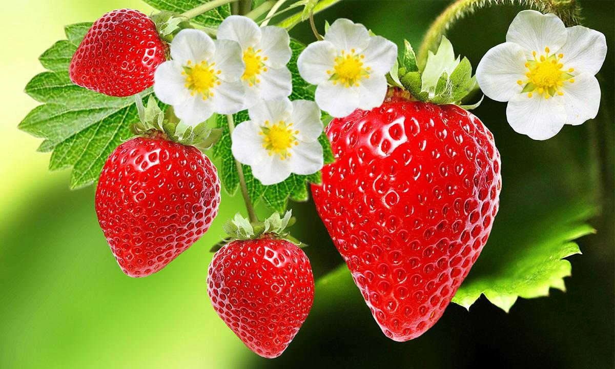 Φράουλες: Με αυτό το tip διατηρούνται φρέσκες