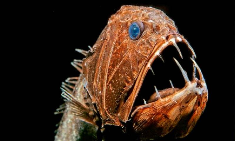 Αυτά είναι τα πιο τρομακτικά ψάρια στην «άβυσσο» της θάλασσας (pics-vids)