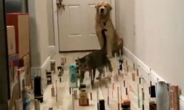 Viral – Σκύλος Vs Γάτα: Το απίθανο challenge της καραντίνας (vid)