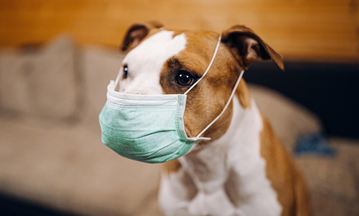 Κορονοϊός: Πώς προστατεύουμε εμάς και τα κατοικίδια από τον ιό (vid)