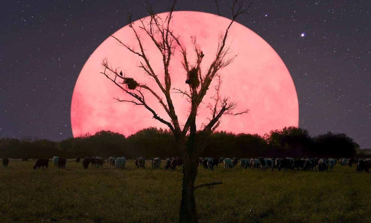 Ροζ υπερπανσέληνος: Το εντυπωσιακό θέαμα στον σκοτεινό ουρανό (pic-vid)