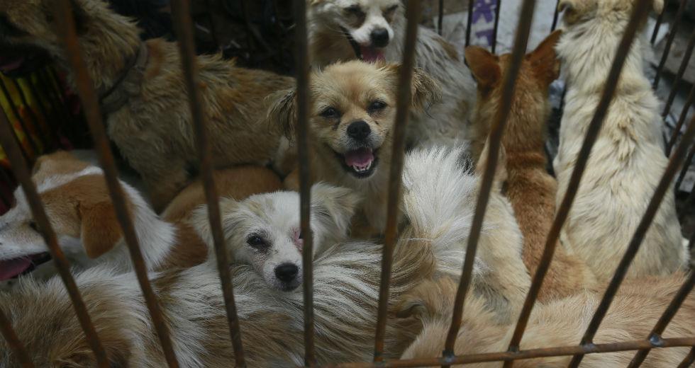 Διαταγή προς τους κατοίκους της Σεντσέν στην Κίνα: Μην τρώτε γάτες και σκύλους!
