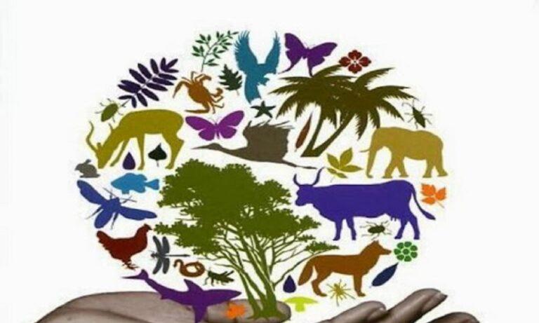 22 Μαΐου: Παγκόσμια Ημέρα Βιοποικιλότητας