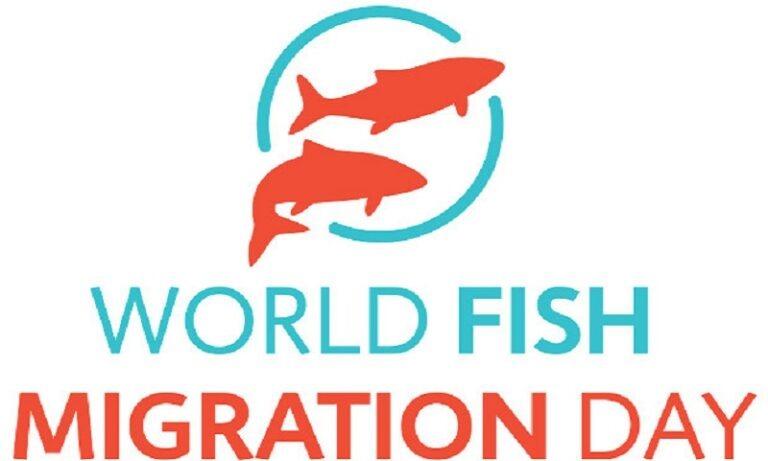 24 Μαΐου: Παγκόσμια Ημέρα Ιχθυομετανάστευσης