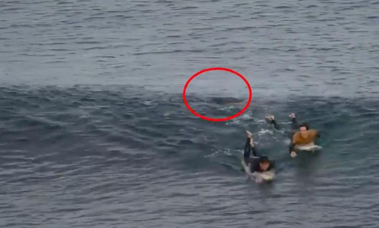 Τρόμος στην Αυστραλία: Έριξε… μπουνίδια στον καρχαρία για να σωθεί! (vid)