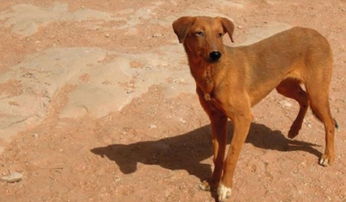 Έφαγαν σκύλο: Και όμως βάσει του νόμου τους οι μουσουλμάνοι μπορούν