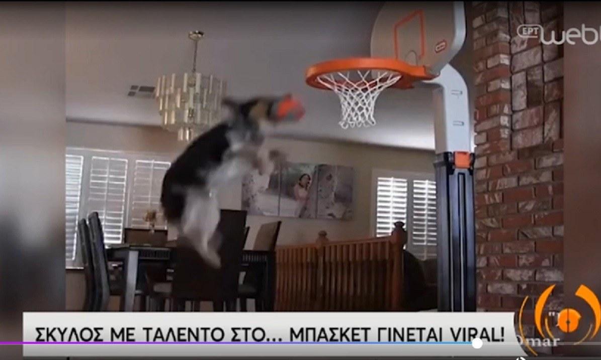 Ποιος Τζόρνταν: Το... Last Dance ενός σκύλου που καρφώνει! (vid)