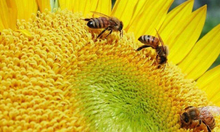 20 Μαΐου: Παγκόσμια Ημέρα Μέλισσας