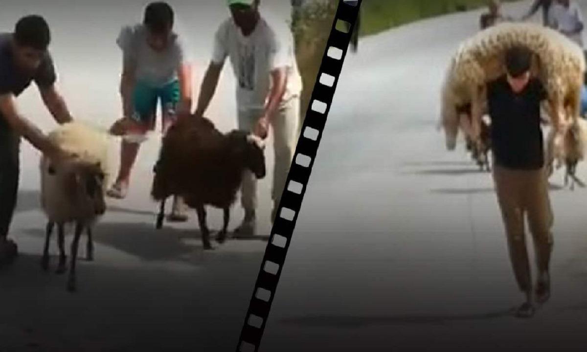 Μόρια – Βίντεο σοκ: Μετανάστες κλέβουν τα πρόβατα των κατοίκων, τα σφάζουν και τα πουλάνε! - Sportime.GR