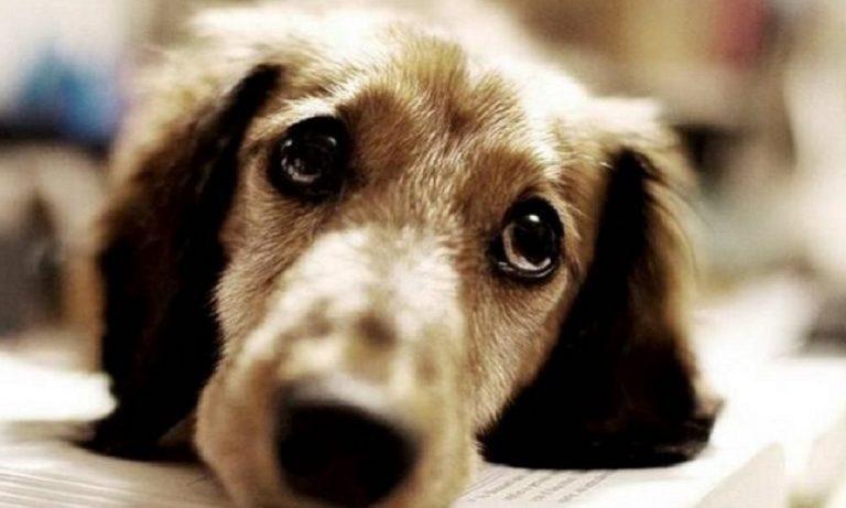 Ημαθία: Παρέσυρε και σκότωσε σκυλί για να μπει σε σπίτι να κλέψει