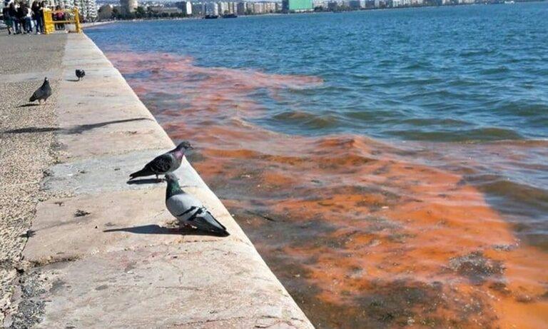 Θεσσαλονίκη: Βούτηξε για μπάνιο στον Θερμαϊκό!