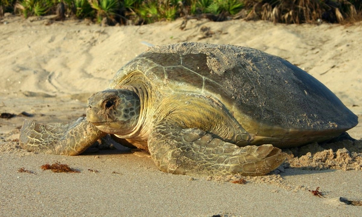 23 Μαΐου: Παγκόσμια ημέρα χελώνας