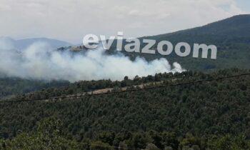 Εύβοια: Κατασβέστηκε πυρκαγιά στο πευκοδάσος στην περιοχή Κυπαρίσσι