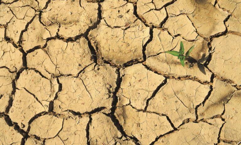 Παγκόσμια Ημέρα κατά της Ερημοποίησης
