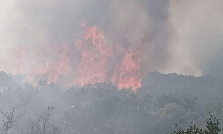 Φωτιά στον Όλυμπο: Επιχειρούν πέντε πυροσβεστικά (vid)