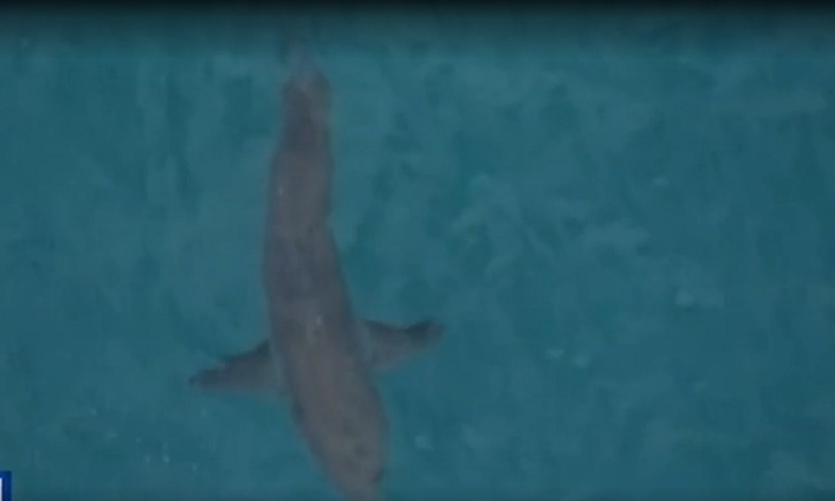 Αυστραλία: Καρχαρίας σκότωσε σέρφερ (vid)