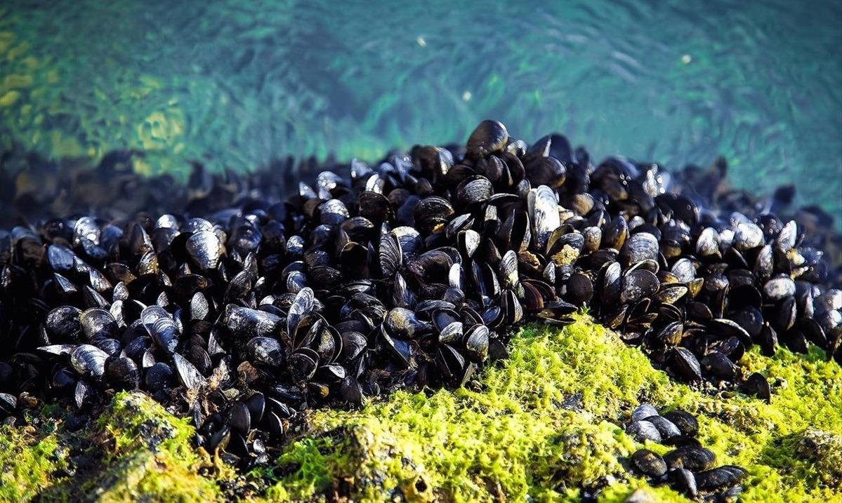 Θεσσαλονίκη: Στον πάτο του Θερμαϊκού, αντί για τα πιάτα μας, 20.000 τόνοι μύδια;