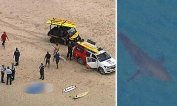 Σοκαριστικό: Καρχαρίας κατασπάραξε σέρφερ (vid)