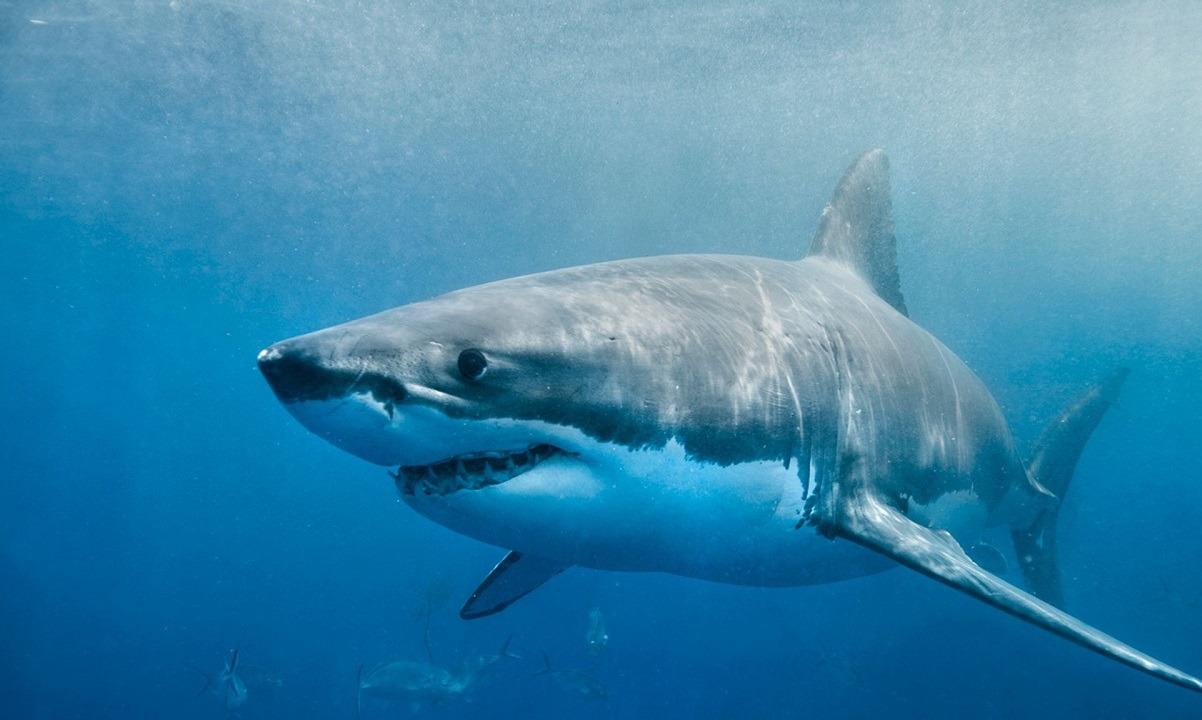 Νεκρός 17χρονος σέρφερ από επίθεση καρχαρία!