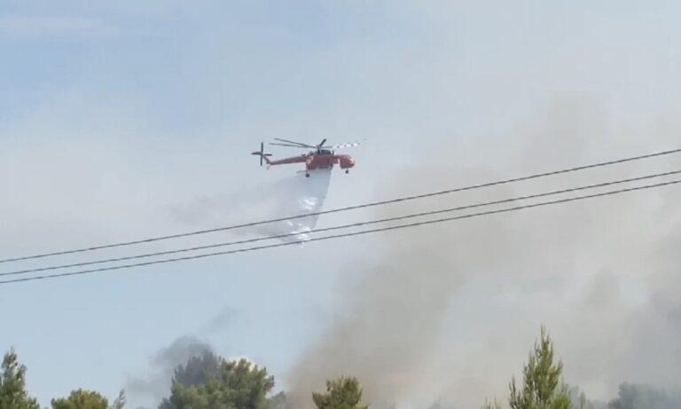 Ηλεία: Μεγάλη φωτιά σε δάσος -Θρίλερ με έναν νεκρό!