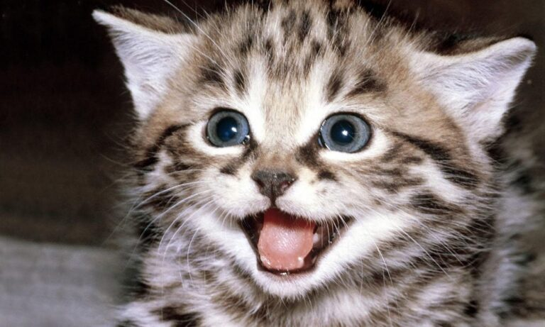 Παγκόσμια Ημέρα Γάτας! Γιορτάζουν οι χνουδωτοί φίλοι μας (vids)