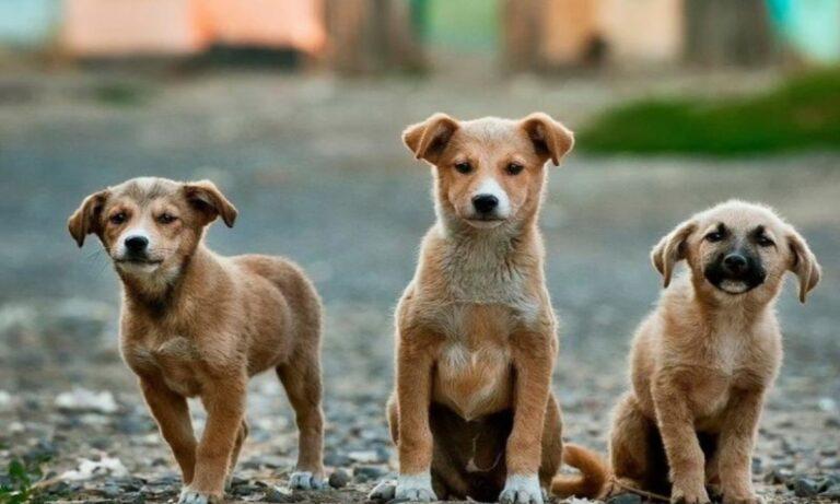 15 Αυγούστου: Διεθνής Ημέρα Αδέσποτων Ζώων