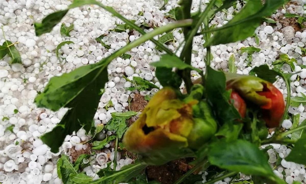 Καιρός: Έπεσε χαλάζι σαν… χιόνι στην Κοζάνη (vids)