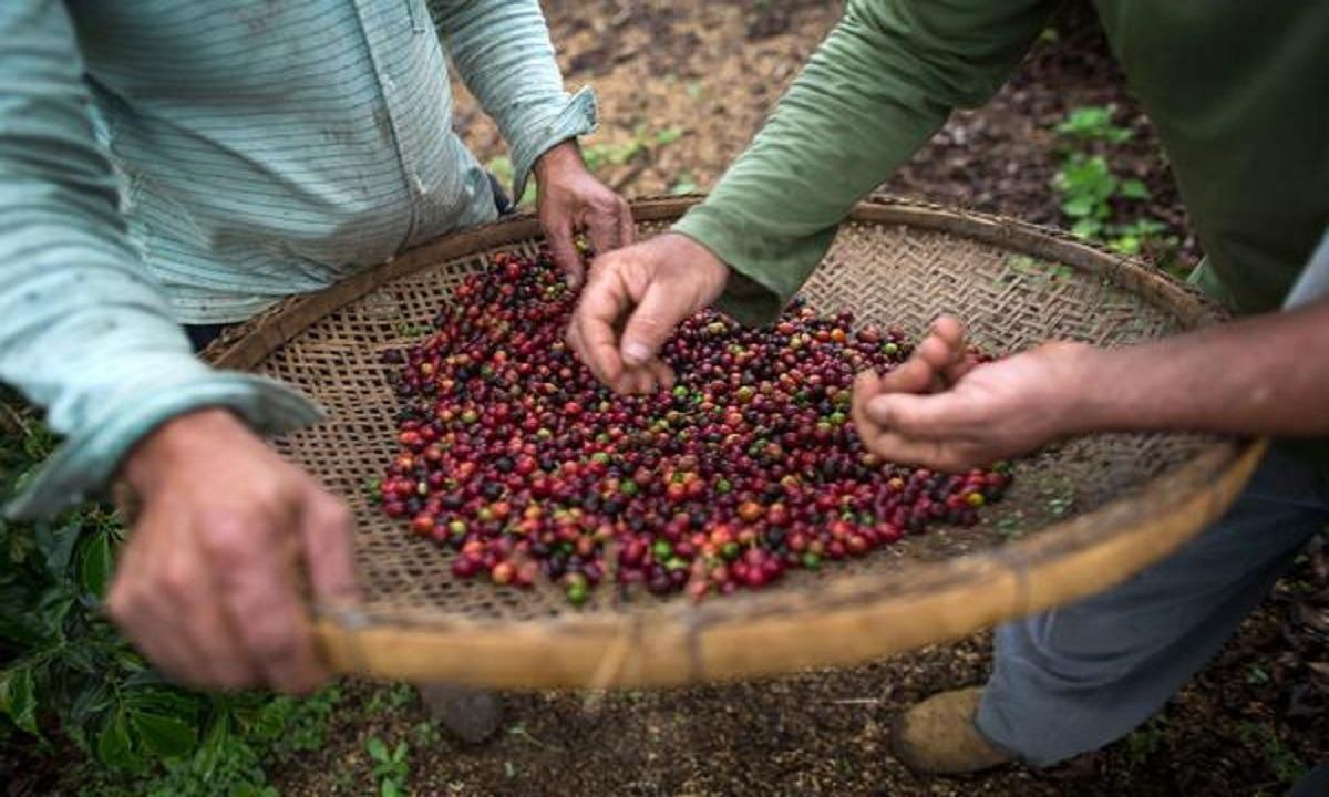 Απίστευτο! «Τελειώνει» ο καφές στην Ελλάδα λόγω Βραζιλίας;