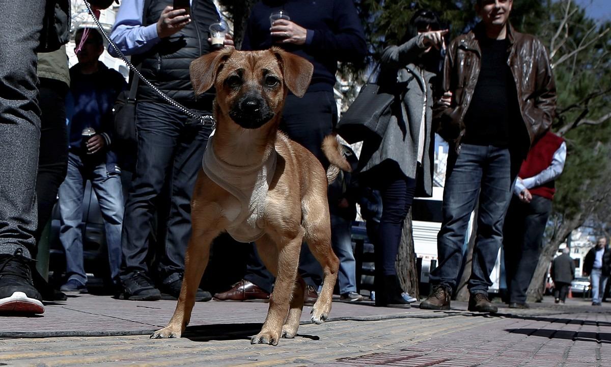 ΣτΕ: Άδεια στους Ευρωπαίους κτηνιάτρους να δουλέψουν στην Ελλάδα
