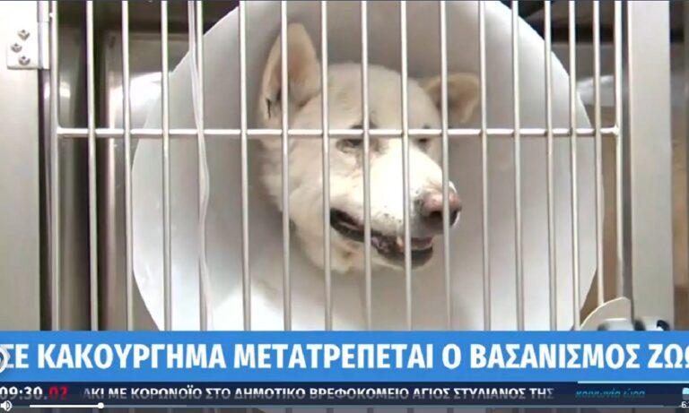 Βορίδης για κακοποίηση ζώων: «Εισηγούμαι να γίνει κακούργημα με κάθειρξη 5-10 χρόνια»
