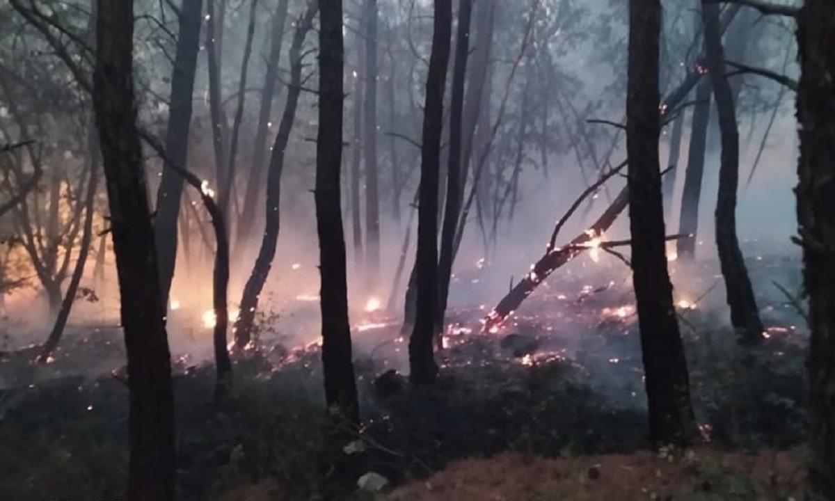 WWF Ελλάς: Κάηκε μέρος ενός από τα σημαντικότερα δασικά οικοσυστήματα της Ελλάδας και της Ευρώπης