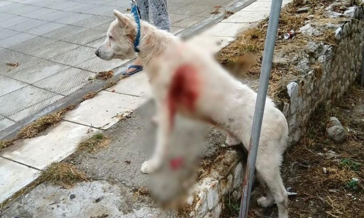 Νίκαια: Επέστρεψε στο αφεντικό του ο σκύλος που μαχαιρώθηκε