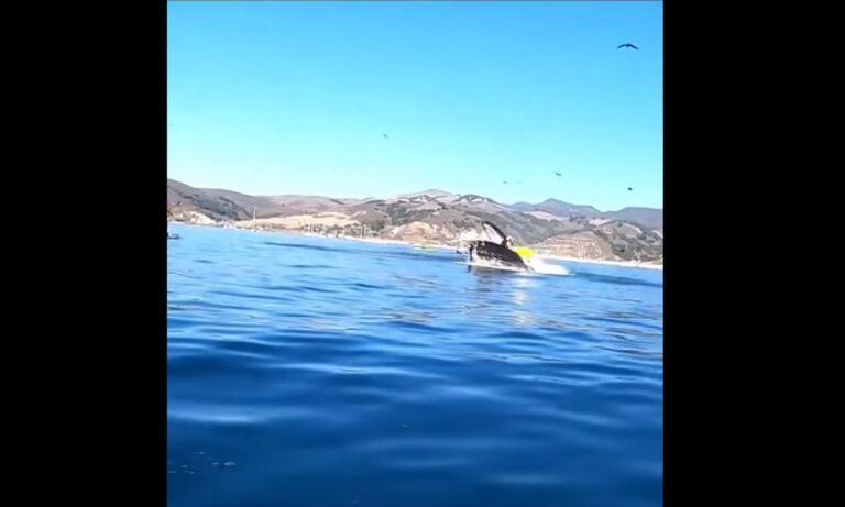 Απίστευτο – Φάλαινα «κατάπιε» δύο γυναίκες που έκαναν καγιάκ στην Καλιφόρνια (vid)