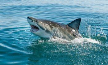 Αυστραλία: Νέα φονική εμφάνιση καρχαρία - Νεκρός ένας 55χρονος (vid)