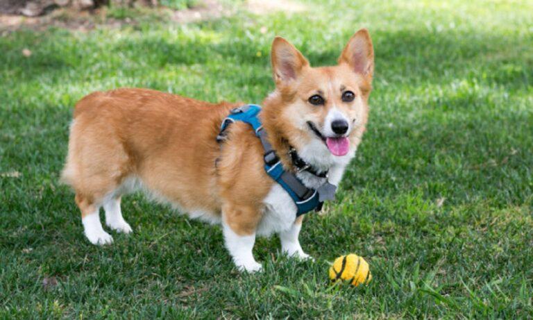 Viral: Ένα μικρόσωμο σκυλάκι παίζει μπάσκετ και τρελαίνει κόσμο