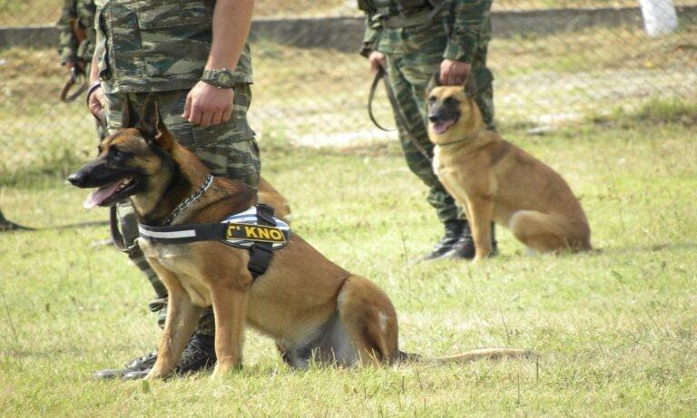 Ελληνοτουρκικά: Σημαντικό ρόλο στην αποτροπή των σχέδιων των Τούρκων στον Έβρο αναμένεται να παίξουν οι 30 «στρατιωτικοί« σκύλοι