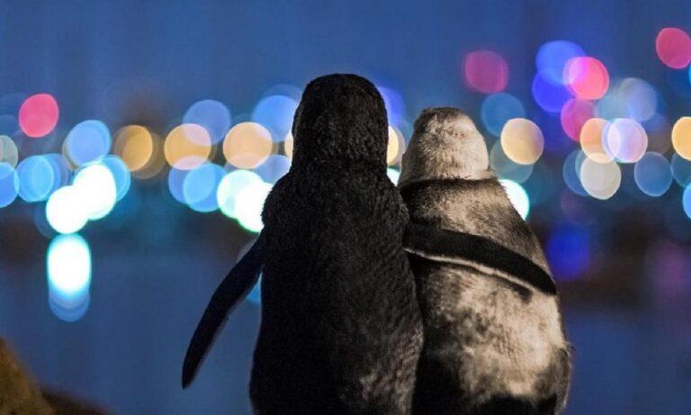 Viral: Η φωτογραφία δύο πιγκουίνων που αγκαλιάζονται η κορυφαία για το 2020
