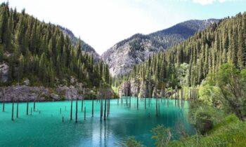 Απίστευτο: Πανέμορφα δάση βυθισμένα στο νερό (pics)
