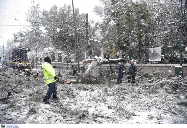 Μήδεια: Προσοχή! Πέφτουν δέντρα από τον χιονιά