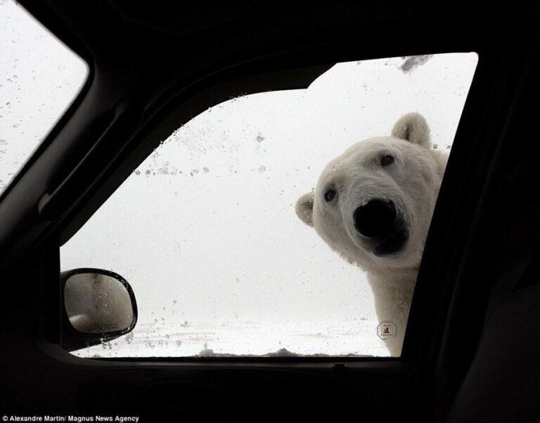 Χιονιάς: Οι χρήστες του Twitter επιστράτευσαν μέχρι και πολικές αρκούδες