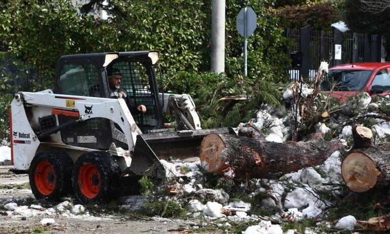 Κακοκαιρία Μήδεια: Πως επηρέασε το βάρος του χιονιού τις πτώσεις των δέντρων
