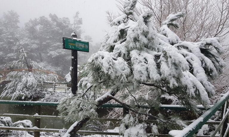 Καιρός (15/2) – Αρναούτογλου: Εντείνεται η επέλαση της «Μήδειας» – Χιόνια και στο κέντρο της Αθήνας