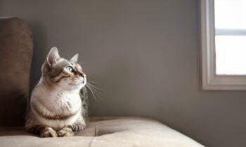 Αμήχανο: Είδε την γάτα του στο κρεβάτι του γείτονα