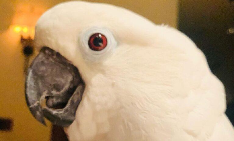 Απίστευτο! Παπαγάλος γνωρίζει το νέο κουτάβι της οικογένειας και του λέει «Σε αγαπώ»