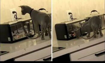 Viral: Γάτα τα έβαλε με μια τοστιέρα! (vid)